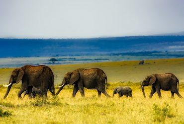 duurzame vakanties safari