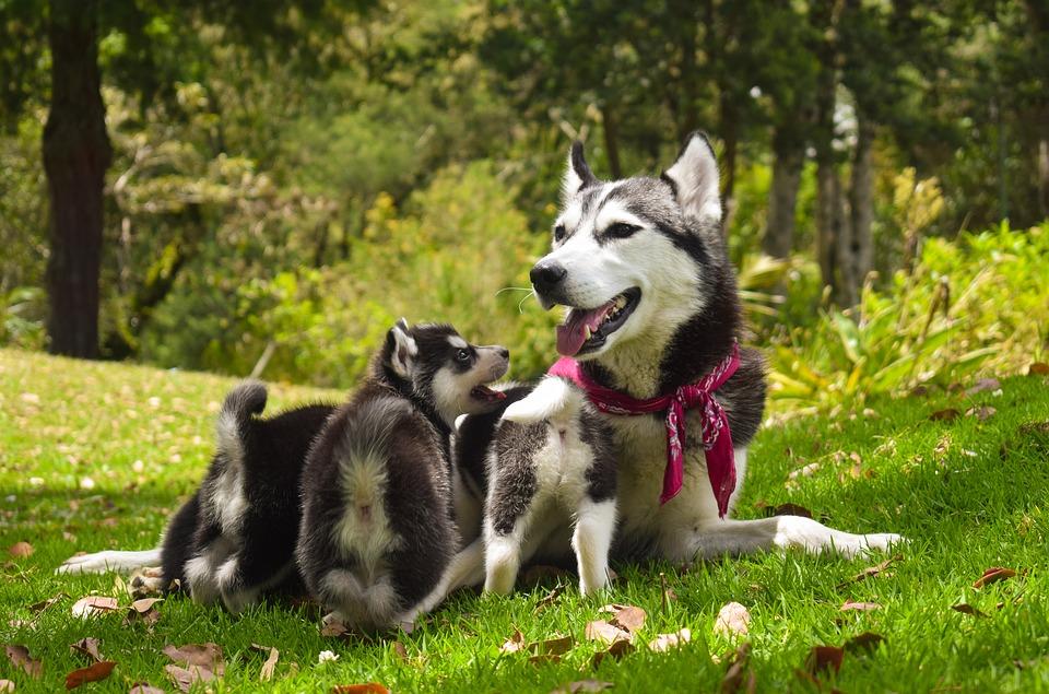 duurzaam om met huisdieren